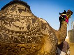 1440326012_nagaur-fair-shaved-camel.jpg